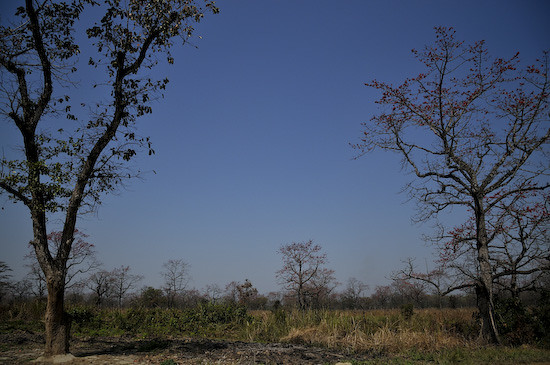 grasslandA5511