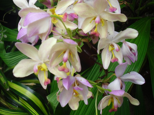 Lovely Orchid Variety