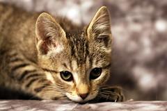 awwww (pwrplantgirl) Tags: cats cat kitty kitteh kitties adoption catrescue kittys adoptionfair alaskacat kittytoadopt alaskacats