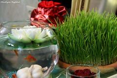 بهارانه 2 (Moustapha B) Tags: green canon eos spring goldfish iran happiness newyear 7d ایران 90 18200 بهار karaj 7seen سبز نوروز کرج مصطفي شرقی 2011 شادي سبزه moustapha ماهی 7سین