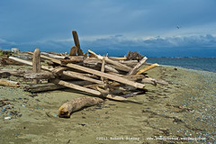 Beach Fortress (Robdphoto) Tags: beach britishcolumbia driftwood boundarybay nikond700 nikonafsmicronikkor60mmf28ged