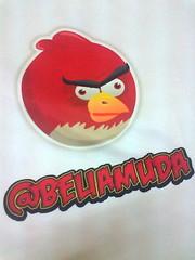 Angry Bird @beliamuda