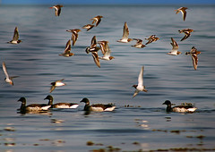 Wader Highway (RobIreland) Tags: ocean ireland sea summer mountains nature newcastle landscapes purple arts down have co mourne robireland