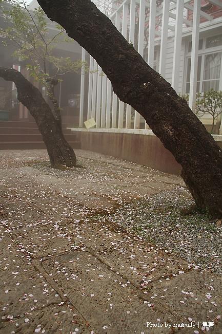 阿里山櫻花季陰天版35
