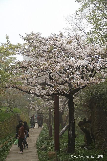 阿里山櫻花季陰天版38