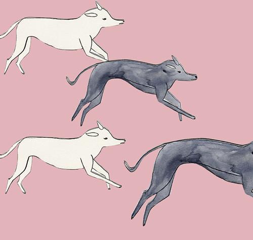 greyhoundys