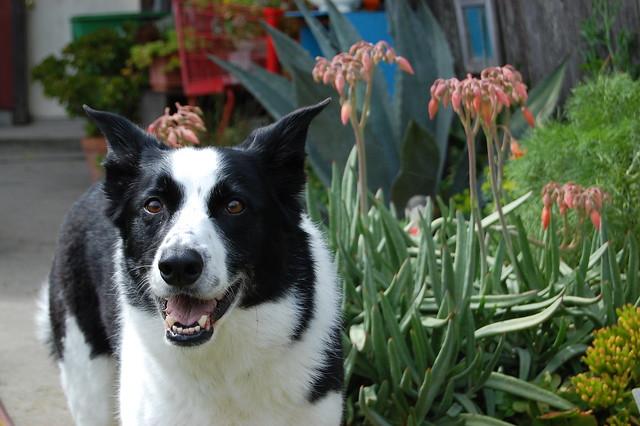 Max in the Garden.