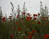 """Red green grey (Vidar """"the Viking"""" Ringstad, Norway) Tags: summer warm flowers wildflowers flora gras straw sky red green grey colors colours nature naturepic natureshot pov outdoor hummel insect canoneos5dmkiii denmark ree"""