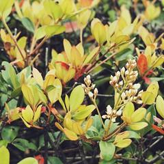 (Jon-F, themachine) Tags: jonfu 2016 olympus omd em5markii em5ii em5mkii em5mk2 em5mark2  mirrorless mirrorlesscamera microfourthirds micro43 m43 mft ft     snapseed japan  nihon nippon   japn  japo xapn asia  asian fareast orient oriental aichi   chubu chuubu   nagoya  outdoors  nature  plants
