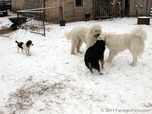 Dogs Playing in the Snow 5