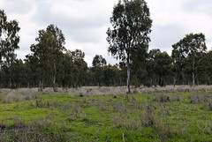 Hedera Forest, Israel (Mark Lukoyanichev) Tags: forest israel nikon hedera hellmaker hederaforest