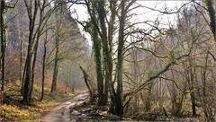 ~~Balade d'hiver~~ (Jolisa) Tags: wood trees light nature nikon arboles camino path lumire arbres sentier chemin fort nspp croquenature