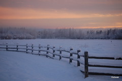 Morning Sky (Rebeak) Tags: morning snow ice alaska fence nikon glow fields yellows fairbanks pinks fencerow skytrees nikond40 creamerfield rebeak mornnngsky
