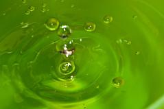 Water Macro (J. E. Gonzalez) Tags: test macro green water closeup drop nikkormicro105mmf28 micro105mm