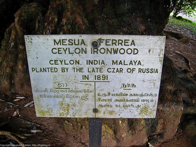 Железное дерево Николая II