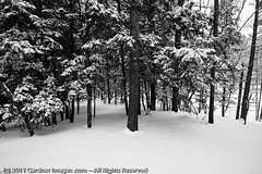 Thick (GardnerImages) Tags: winter white snow storm cold ice warning apocalypse newengland newhampshire conservation nh 101 heavy blizzard amherst preserve hillsboro merrimack snowday acreage nashua apocalyptic hillsborough snowpocalypse 101a pennichuck