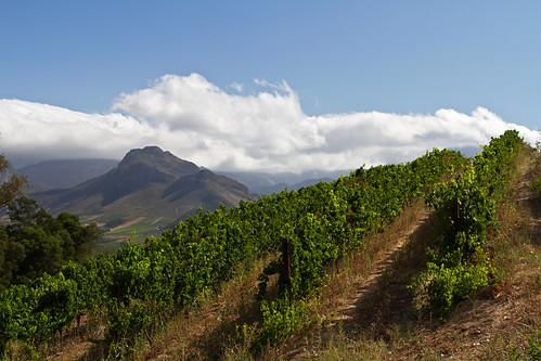 Wine Yards at Tokara