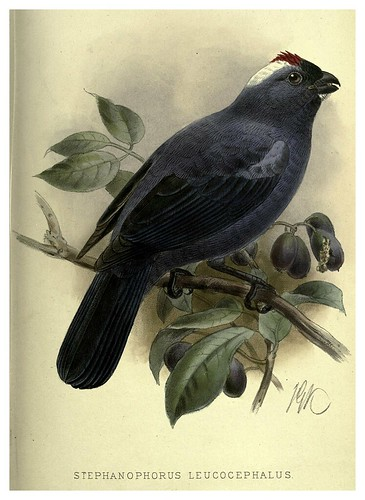 021-Tangara cabeza de nieve-Argentine ornithology…1888- William Henry Hudson y Philip Lutley Sclater