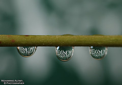 (Mohammad Ahmad Al faifi) Tags: reflection canon is drops photographer graphic drop mohammed saudi arabia dedicated  500d yanbu        55250   alfaifi