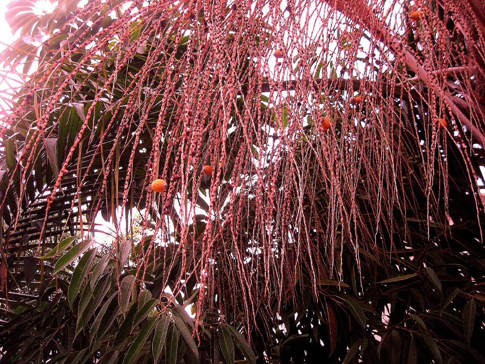05-02-2011-tree