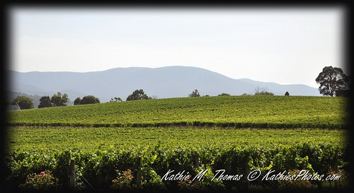 Oakridge Wines Estate, Coldstream