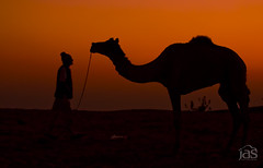relationship (jas-B) Tags: india man work camel relationship pushkar rajasthan cattalfare