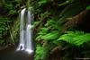 Waterfalls :: Beauchamp Falls (-yury-) Tags: park nature landscape waterfall great australia victoria falls national otway beauchamp