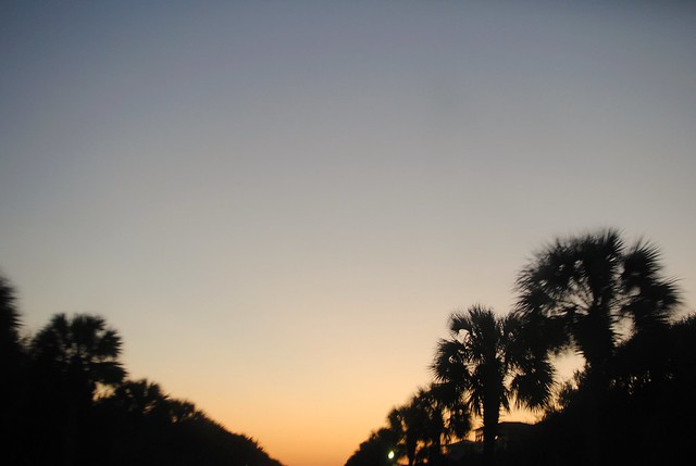 palmettos at sunset