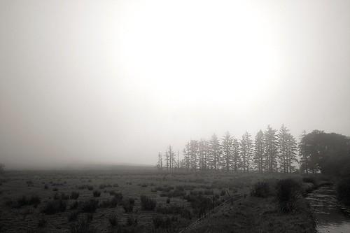 Moor mist