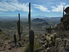 desert vista (azhiker_grrl) Tags: arizona cactus sky nature clouds landscape outdoors view tucson hike adventure vista saguaro sonorandesert cholla tucsonmountains catmountain ajoroad