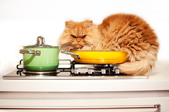 Garfi-Unwanted Behaviour-Find a way to keep me off the kitchen! (E.L.A) Tags: orange pets kitchen horizontal closeup cat turkey photography feline europe sitting character humor kittens nopeople istanbul indoors attitude stove pan relaxation mischief domesticanimals garfield domesticlife enjoyment domesticcat gettyimages frontview unhygienic persiancat facialexpression garfi oneanimal colorimage lookingatcamera homeinterior animalthemes bestcatphotos