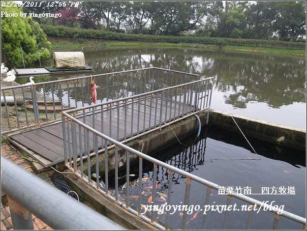 苗栗竹南_四方牧場20110220_R0017966