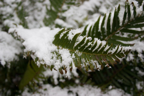 Snowfall in Portland