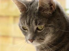 Paige (Sf) Tags: cats animals cat lumix tiere katze katzen fz45 panasonicfz45