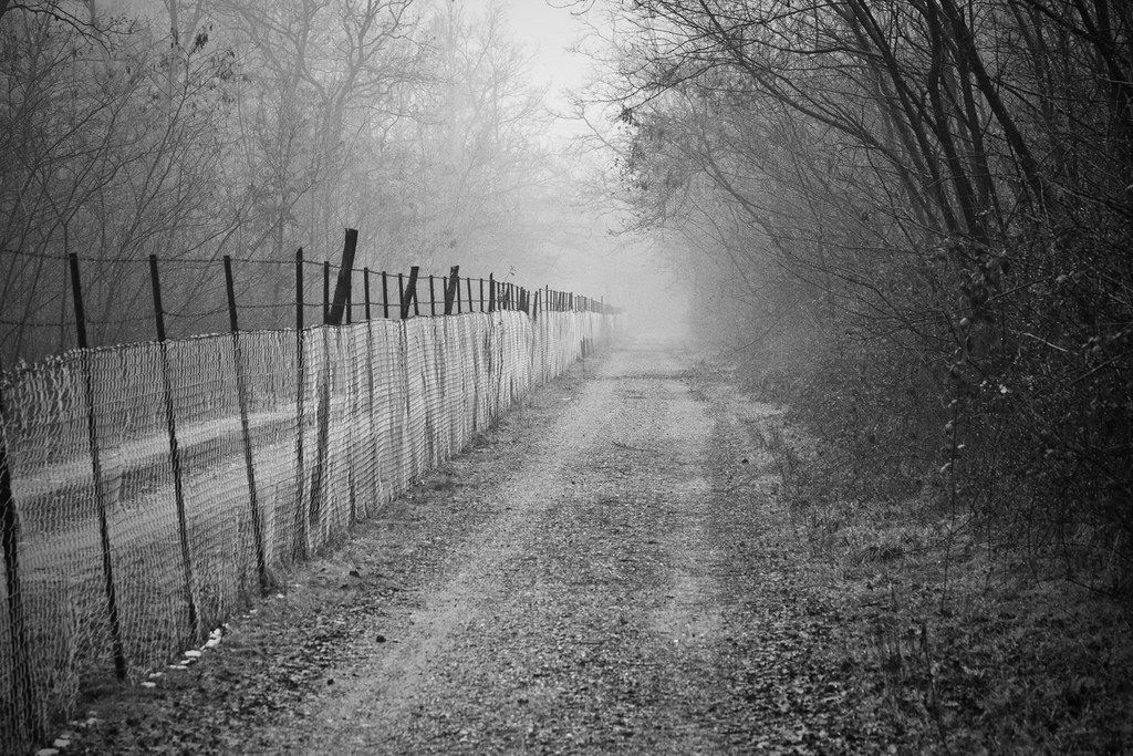 Road along a fence