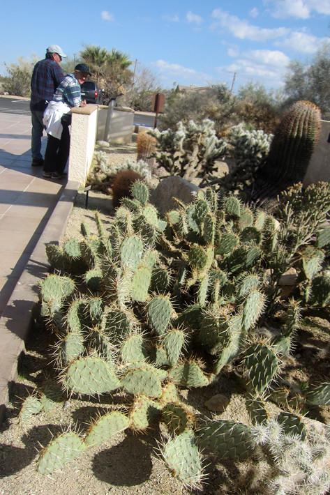 022311_cactus00