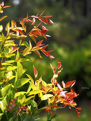 Colorful (-clicking-) Tags: lighting trees light red sunlight green nature leaves garden leaf spring colorful natural buds newbuds