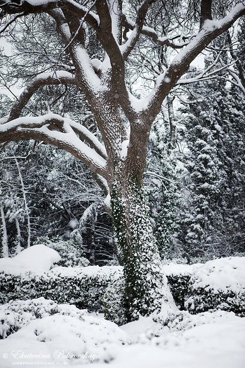Voroncov_palace__winter_21