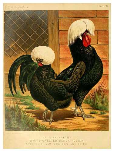 007-The illustrated book of poultry. With practical scheduals…1873-Lewis Wright.