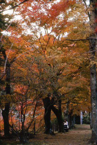 Autumn Hakone by Lono_Luno