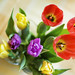 it's time for tulips