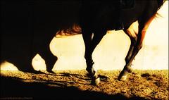(L *) Tags: horse love sport nikon passion tamron cavallo 70300 d60 equestrianism