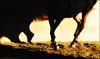 (Lù *) Tags: horse love sport nikon passion tamron cavallo 70300 d60 equestrianism