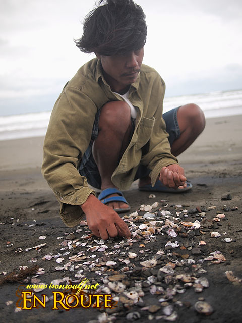 Gathered shells are laid out and sorted