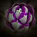 #289 Knospe (Blumen_20090510__DSC4574-Bearbeitet)