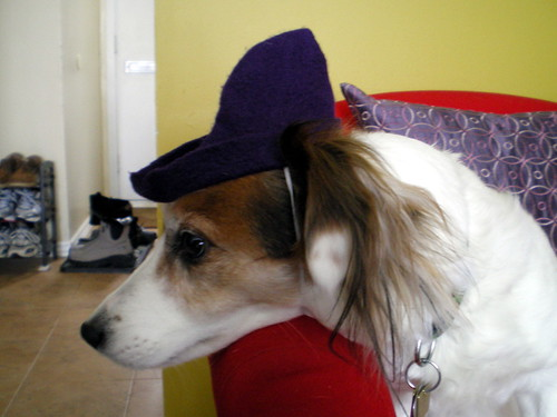 Dog In Hat.