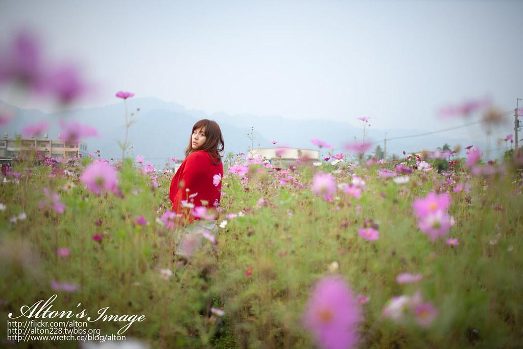 花田裡の小紅