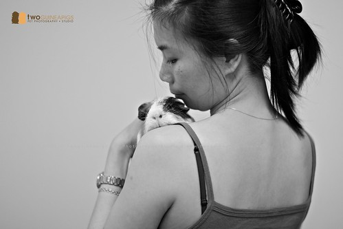 twoguineapigs pet photography | Human cuddling a guinea pig