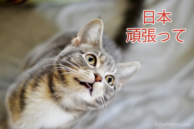 cute cat nippon gambatte japan you can do it