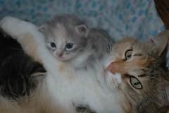 Eccomi..... (virgiliomulas.) Tags: casa foto curiosa luce nascita parto quattro gatta cesto gattini assistenza mammagatta grifis assomiglio virgiliocompany vg~catsgallery 18giorni muradomestica duemaschieduefemmine